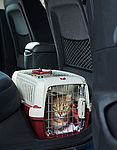 """Hauskatze in Transportbox im Auto"""