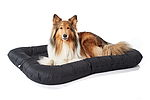 """Collie in Hundebett"""