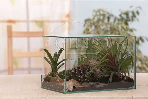 terrarium f auf dem boden lebende vogelspinnen oh95 492. Black Bedroom Furniture Sets. Home Design Ideas